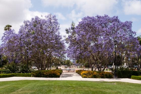campus-28-of-501.jpg
